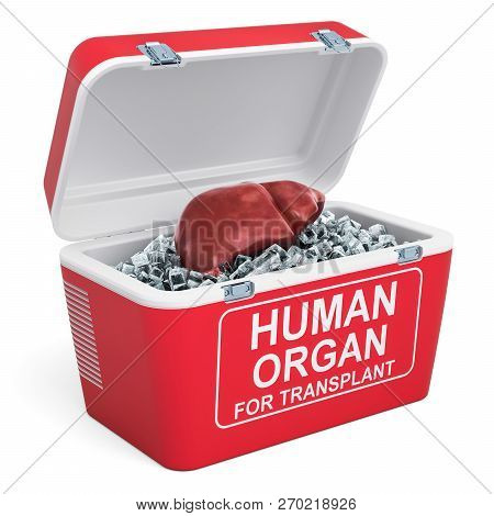 Human Liver Inside Portable Fridge For Transporting Donor Organs, 3d Rendering Isolated On White Bac