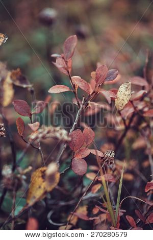 Deep autumn in forest on Russian Nord, bog bilberry, whortleberry poster