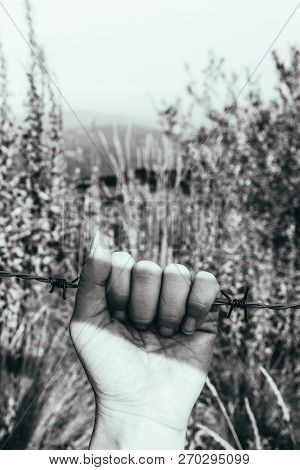 Prisoners Hand, Holding A Barbed Wire Fence. Restricted Area, Freedom Struggle, Jail Prison Terror,