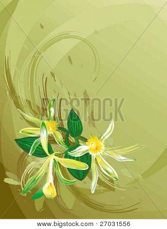 orchid vanilla flowers