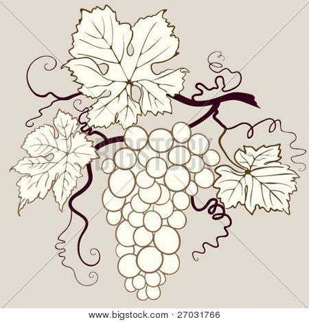 isolated grape illustration