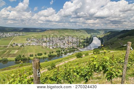 Trittenheim On The Moselle Rhineland-palatinate Germany Picture