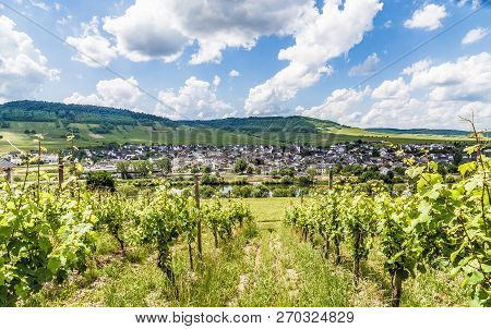 Leiwen At The Moselle Rhineland-palatinate Germany Picture