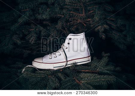 Converse Sports Shoes Hanged On Pine Tree