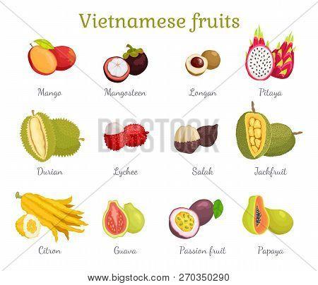 Vietnamese Tropical Fruits Set Vector. Mango Mangosteen, Lychee, Guava, Salak And Papaya. Jackfruit