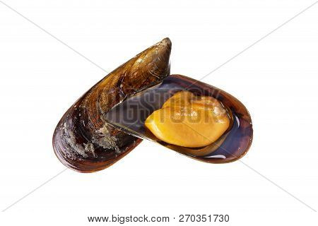 Cooked mussels isolated on white background. Mytilidae. Mussels from Atlantic ocean aquaculture Galicia Spain poster
