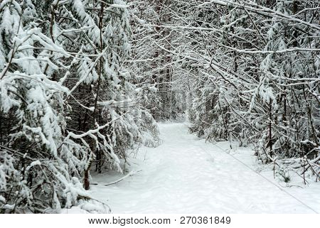 Snowbound Path In A Winter Park With Conifers