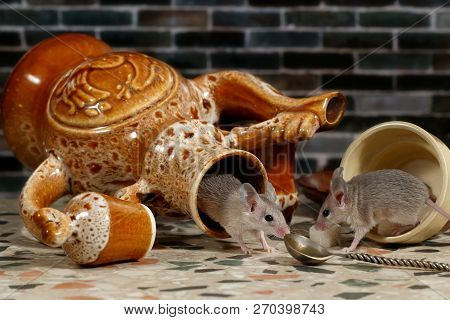 Two Mice On Countertop In The Kitchen. One Mouse Comes Out Of An Overturned Ceramic Jug. The Second