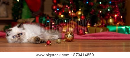 Cute Persian Colorpoint Kitten Lies In Front Of A Christmas Tree With Some Ball Ornaments - Banner