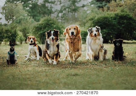 Many Dogs Run On Grass. Green Parck Background