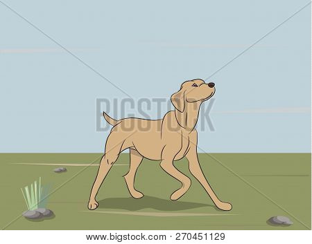 Dog Running, Color, Vector