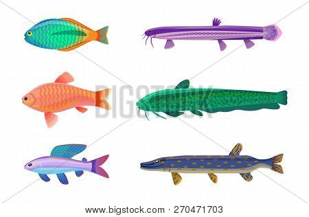 Jewel Cichlid And Brook Trout Fish. Tropical Cold-blooded Animals With No Limbs Living In Water. Dif