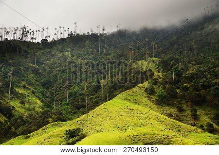 Cocora valley, Salento, Colombia, South America