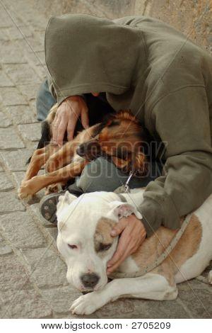 Vagabond Dogs