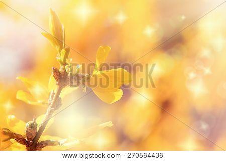 Flowering Branch, Blooming Yellow Flower In Spring
