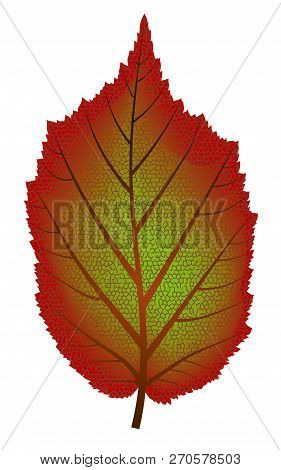 Abstract Image Of Red And Green Autumn Tree Leaf - Vector Illustration