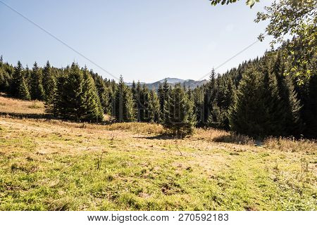 Mountain Meadow With Forest Around On Svidovske Sedlo, Velky Bok And Other Hills On The Background A