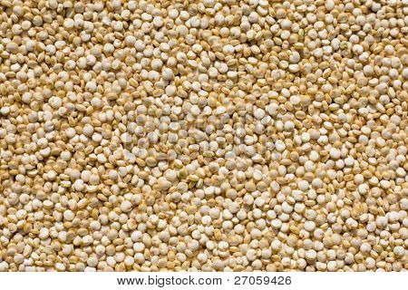 closeup of fresh quinoa seeds, Inca's rice