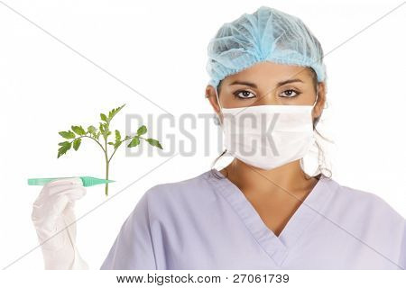 young scientist holding gmo tomato plant with pincers