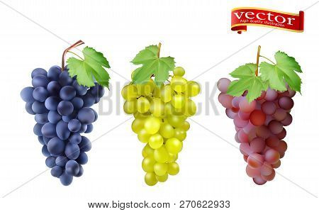 Red, Pink Muscatel And White Table Grapes, Wine Grapes. Fresh Fruit, 3d Vector Icon Set. Cluster Of