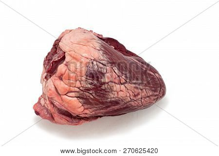 Raw Beef Heart Isolated On White Background.