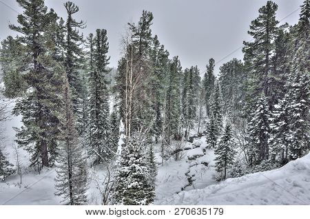 Heavy Snowfall In The Winter Mountain Coniferous Forest, Where A Small Brook Flows Between Snowdrift