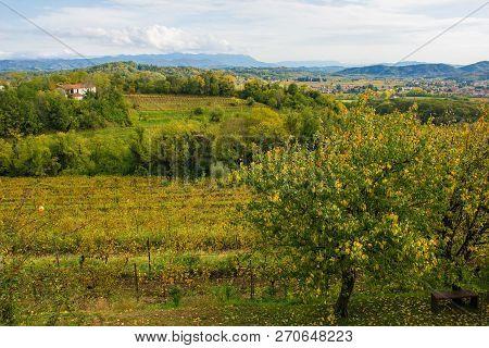 The autumn landscape in the Collio vineyard area of Friuli Venezia Giulia, north west Italy. Taken near to Abbazia di Rosazzo Abbey poster