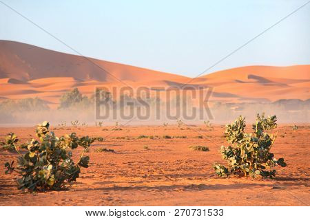 Landscape in Sahara desert, Morocco. Bushes and sand dunes on blue sky background