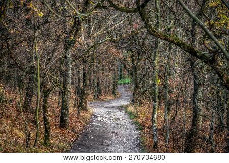 Natural Magic Path In Autumn Forest With Tree Without Leaves.