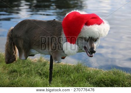 Santa Hat on a plastic wolf or coyote bird decoy.  Decoy of a Plastic Wolf or Coyote decoy to keep geese, ducks and other birds away from a newly renovated park outdoors.