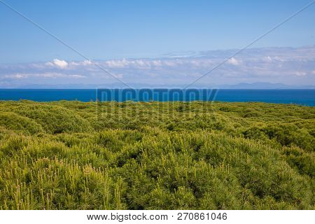 Africa And Strait Of Gibraltar Over Forest From Spain