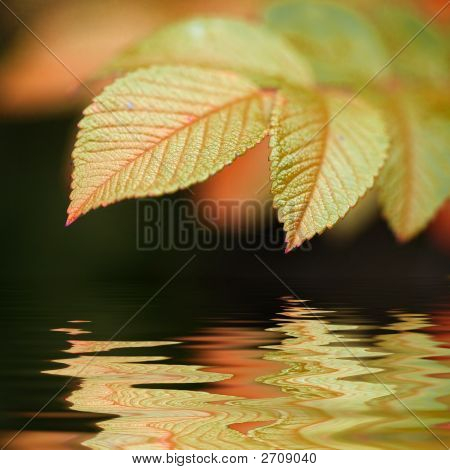 Green Vivid Leaf With Copyspace