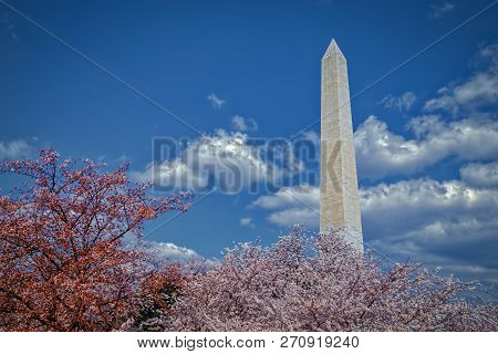 The Washington Monument Behind Cherry Blossoms On The Tidal Basin In Washington, Dc.