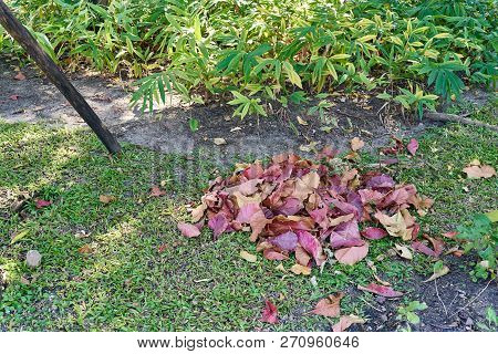 Pile Colorful Dry Leaves On Grass In Garden