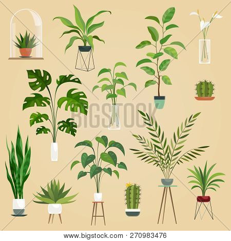 Plants In Pots. Houseplant, Succulent Plants. Ficus Planting In Flowerpots Vector Isolated Set.