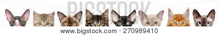 Large Group Of Kitten Half-face, Front View. Isolated On White Background. Baby Animal Theme