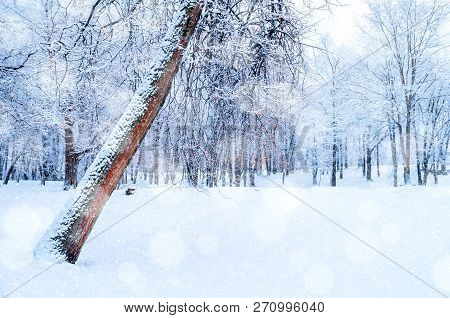 Winter Christmas landscape. December Christmas winter forest with deciduous winter tree covered with frost. Snowy Christmas winter scene with Christmas mood, forest trees and falling snowflakes