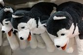 Cuddly soft toys of husky dogs from the kids shop for sale in a gift shop poster