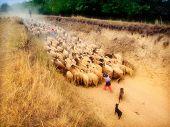 Pastoral scene poster
