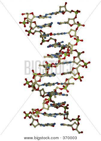 Dna Double Helix Molecule