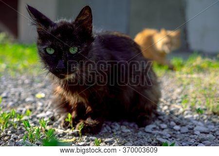 Stare Stray Cat Sitting Ground.stare Stray Cat Sitting Ground