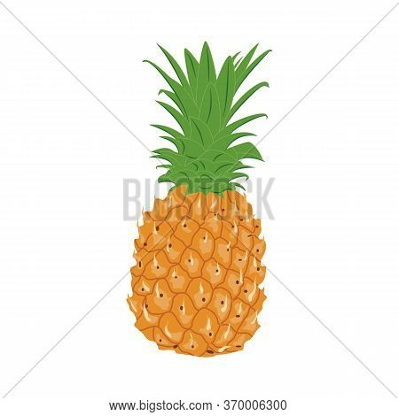 Whole Unpeeled Uncut Pineapple Isolated On White Background. Vector Illustration Of Fresh Pineapple