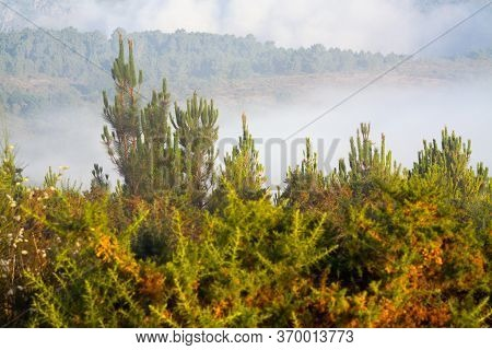 Misty Landscape With Forest In Summer Morning. Galicia, Spain
