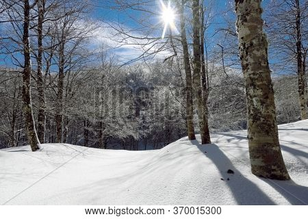 snow on path of frozen forest in winter Mountains of Sicily tourism outdoor activity