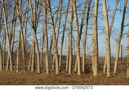Row Of Goofy Logs In Autumn, Piedmont - Italy