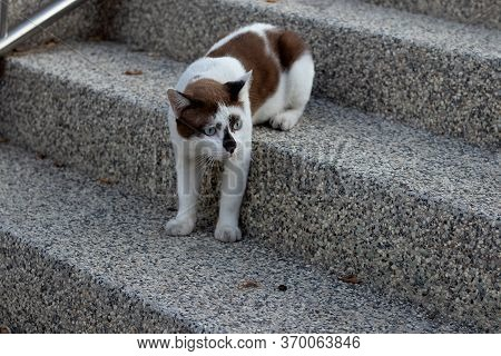 White And Brown Tabby Beautiful, Solitary On The Stairs