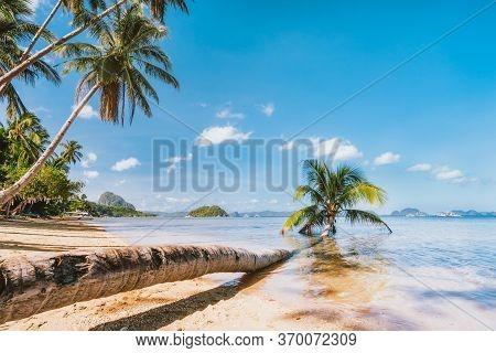 Stem Of Fallen Palm Tree Laying In Lagoon Water On Sandy Corong Beach, El Nido, Palawan, Philippines