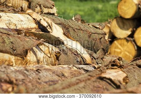 Large Amount Of Harvested Wood Piled Together In Heaps, Industrial Site In Forest