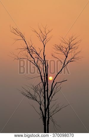 Sunrise Through A Silhouette Of Leafless Tree , Ideal For Use In The Design Fairly