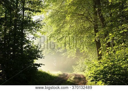 Spring forest path Nature sunrise Nature background Nature sun Nature landscape Nature landscape Nature background landscape Nature trees Nature landscape Nature background landscape Nature background Nature landscape Nature landscape Nature background.